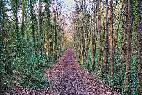 Woodland - image: Chalkie