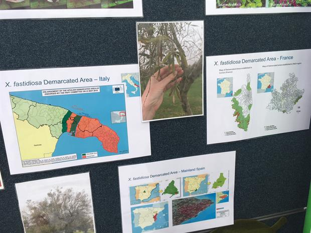 Plant health agency warns plant importers over accuracy of Xylella