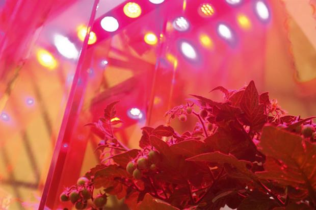 LEDs: option for tomato crops - image: HW