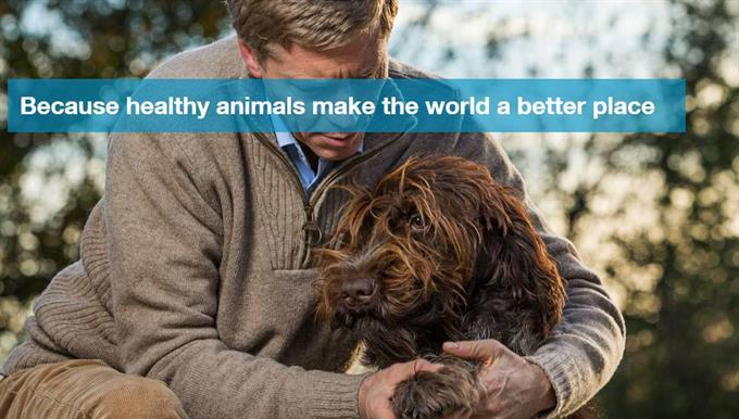 Bayer awards global Companion Animal account to Proximity and BBDO