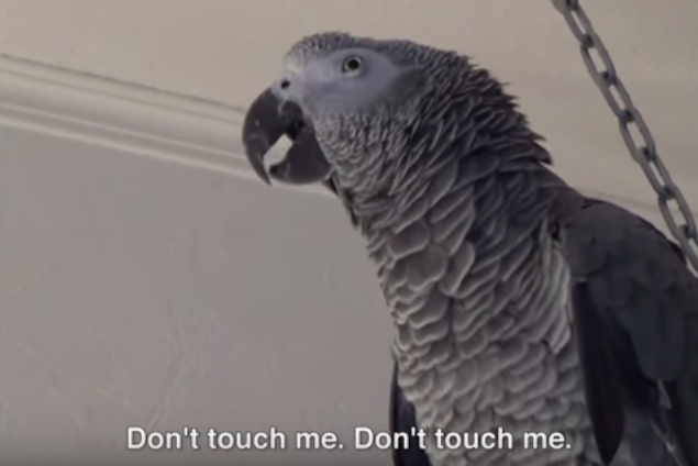 'Cursing Parrots' for UNICEF by Grey New York