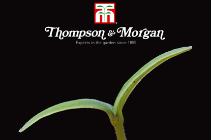 T&M... new agency