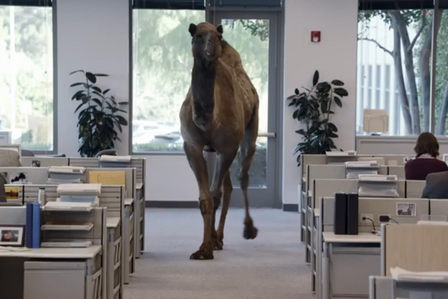 Geico's ad gives a camel a happy hump day