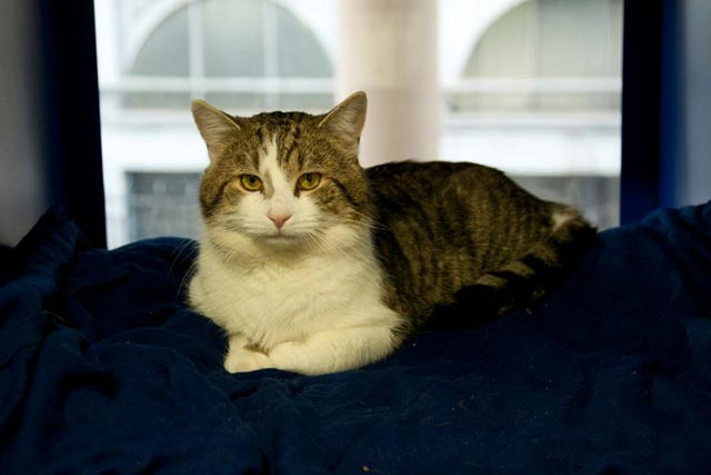 Larry: Downing Street tabby has starring role in Whiskas ad