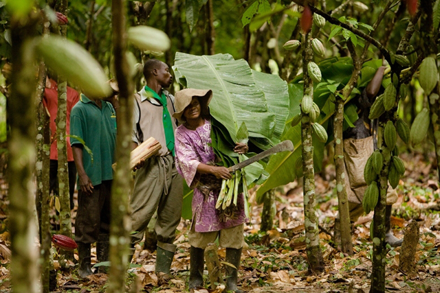 Magnum: ties up with the Rainforest Alliance