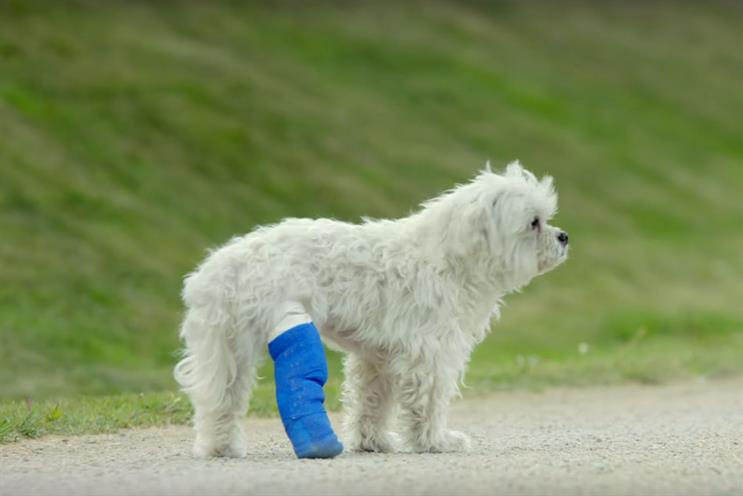 Amazon saves the day for a lame dog in its new campaign