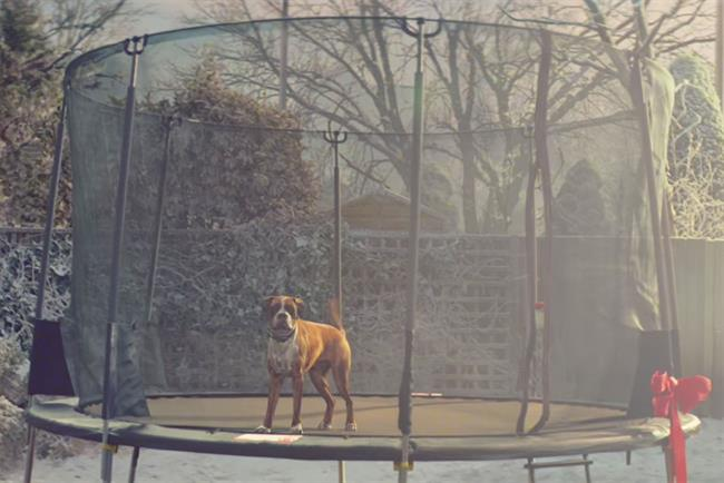 John Lewis' 'Buster the Boxer' outdoes 'Man on the moon' in views