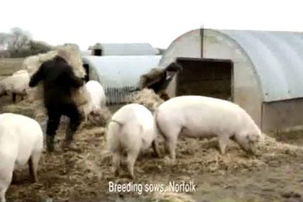 Waitrose ad : outdoor bred claim was misleading says ASA