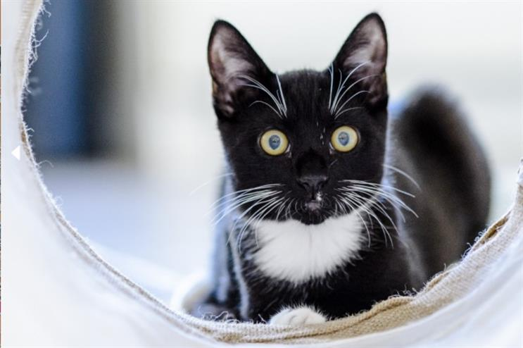 Blue Cross opens the world's first estate agents for cats