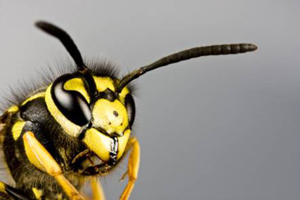 Wasp: Rentokil asks victims to map attacks on Twitter