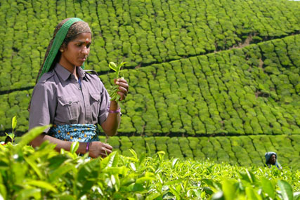 Typhoo: set to put marketing focus on Fairtrade certification