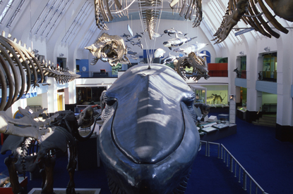 Natural History Museum…looking for an agency