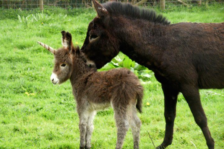 A unicorn is born in a Florida wildlife park on April's Fool Day