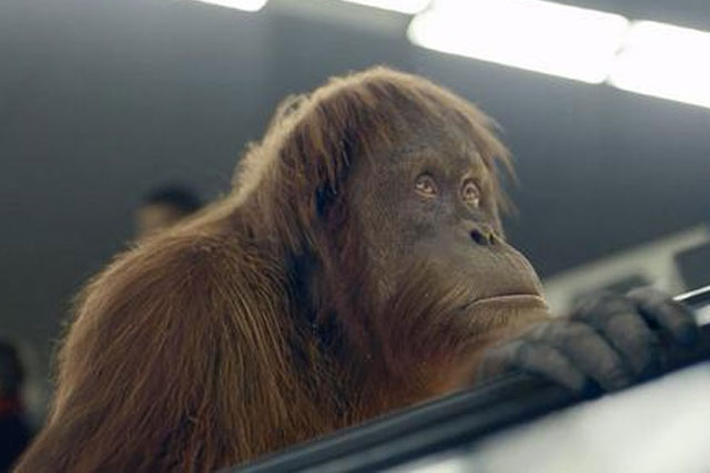 SSE: latest ad features Maya the CGI Orangutan