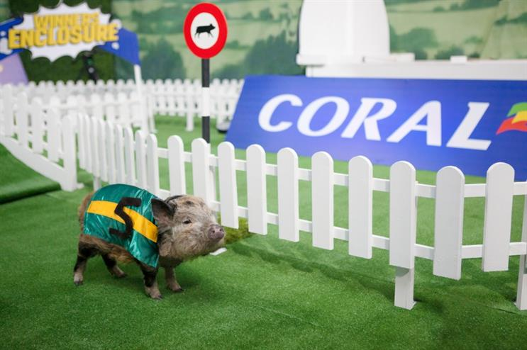 The micropigs will be dressed in racehorse silks