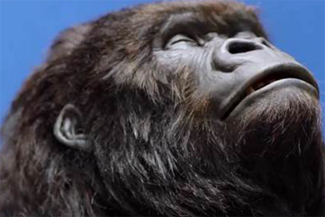 Aldi: last month McCann Manchester spoofed the Cadbury's gorilla in an Easter ad