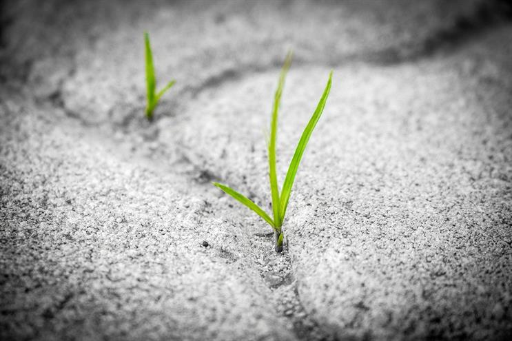 Green shoots: fewer campaigns are being deferred indefinitely (Picture: Pixabay.com)