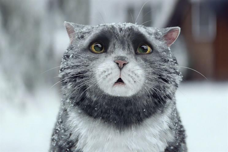 Mog the cat: star of Sainsbury's Grand Prix-winning campaign for PHD