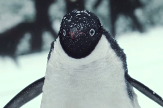 Monty the penguin