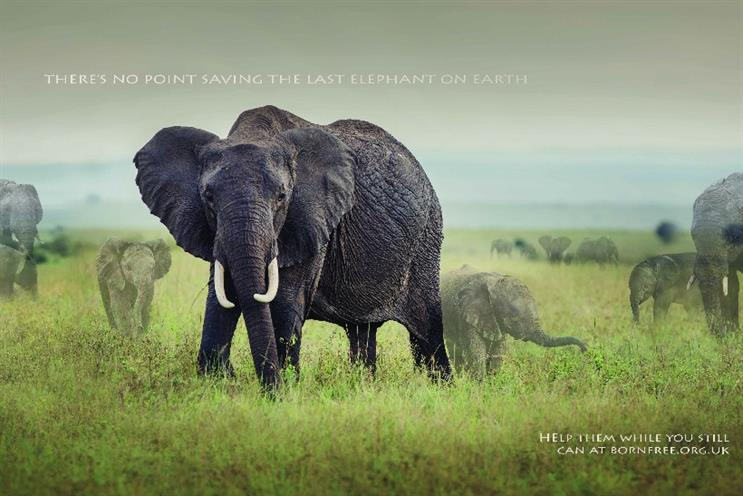 Born Free Foundation: campaign shows endangered animals fading