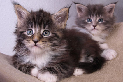 Pet treatments: Novartis brief
