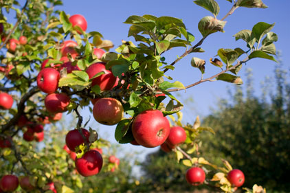 Criticised: organic produce