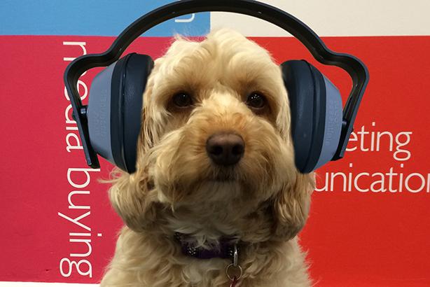 Revealed: Inside the dog-eat-dog world of PR pets