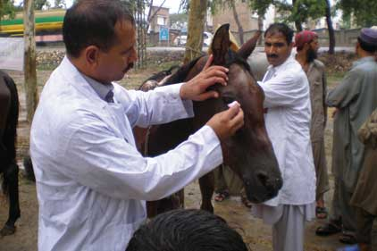 Bolstering comms: equine charity The Brooke