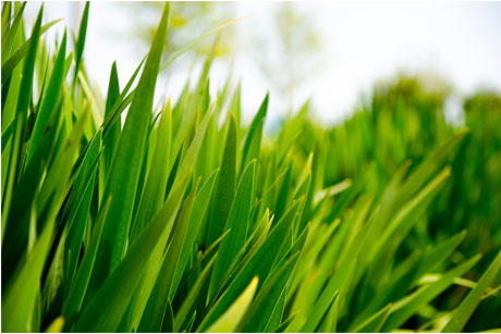 IPA Bellwether: Green shoots of recovery?