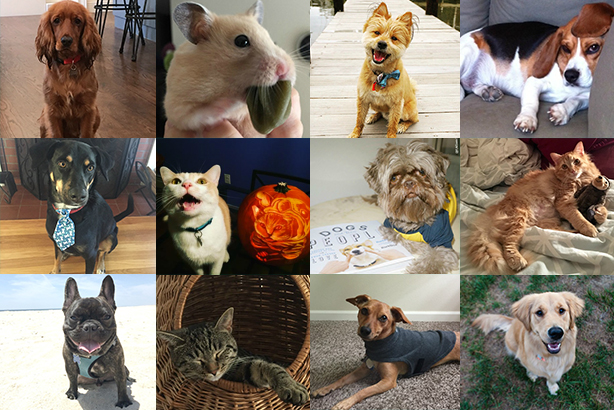 Choose the cutest pet in PR