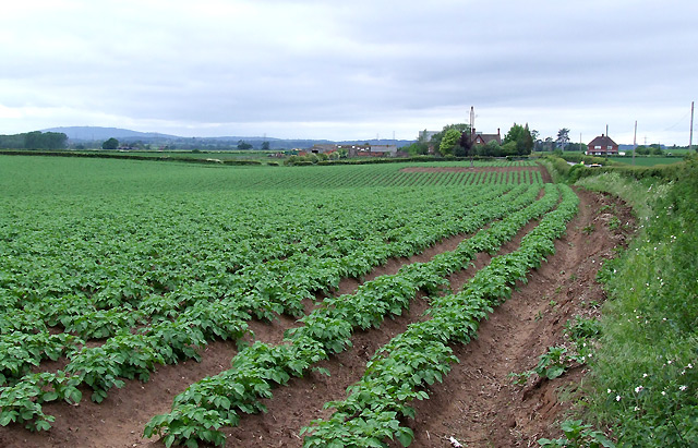 Potato firm Greenvale requests agency for consumer and b2b brief