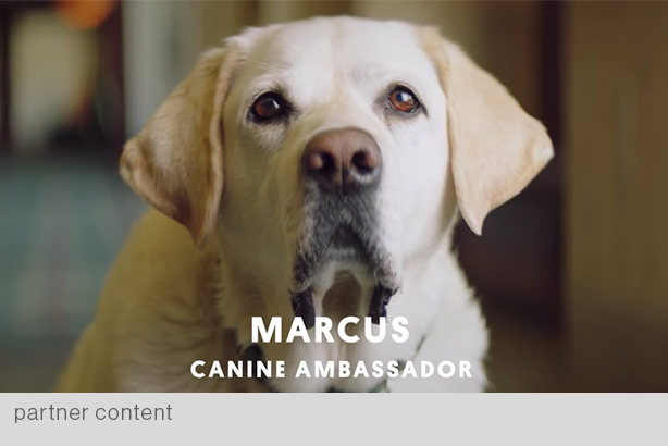 """Fairmont Hotels & Resorts' """"Canine Ambassadors"""" was among brand films screened at May 1 Group SJR-hosted event. (Film was produced by Great Big Story's brand studio Courageous)"""