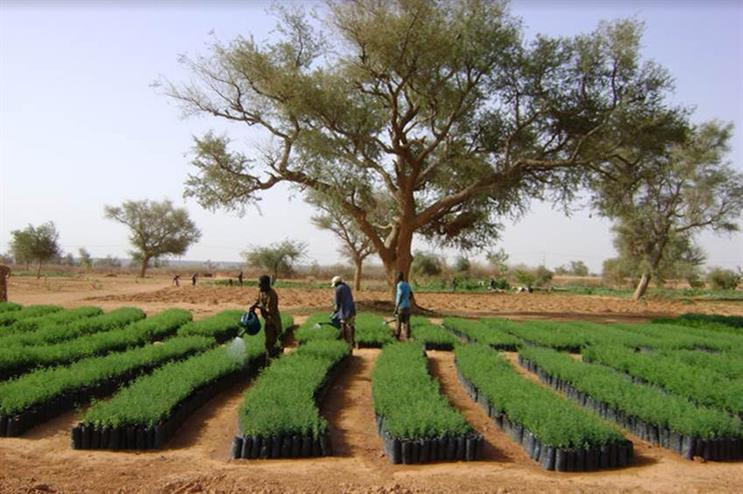 Brands2Life is working with Tree-Nation to raise awareness about reforestation projects