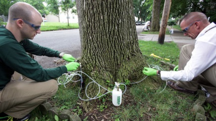Arborjet works out the bugs in Cleveland neighborhood