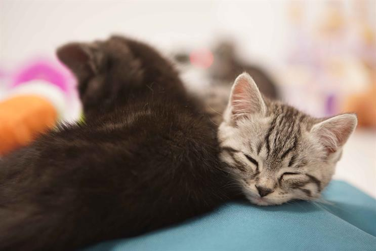 Watch: Argos seeks to sooth Black Friday shoppers with kitten video channel
