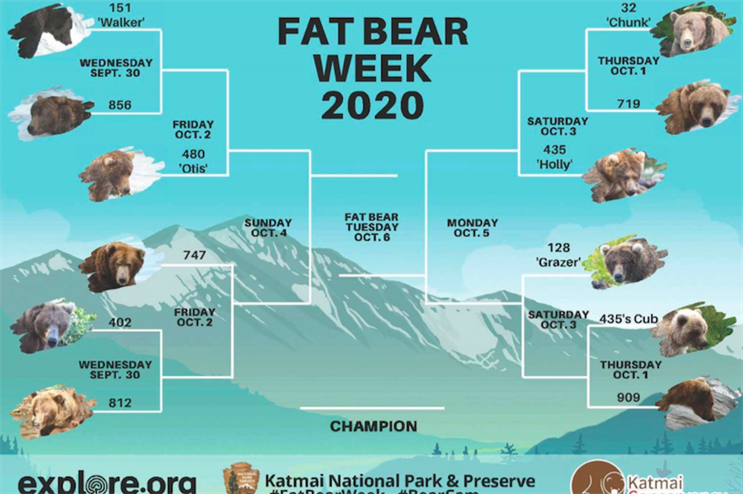 'We really need it this year more than ever': Don't worry, Fat Bear Week is back