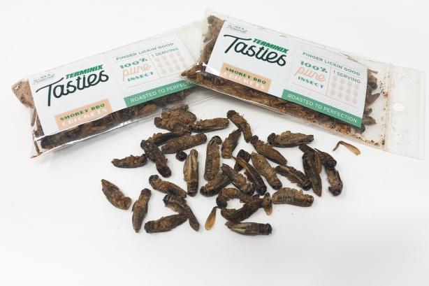 Baseball, peanuts, and...crickets? Inside the Terminix Tasties campaign
