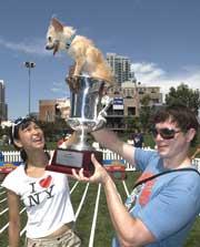 PETCO's Chihuahua races increase brand awareness
