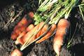Organic food:  focus of Soil Association comms drive