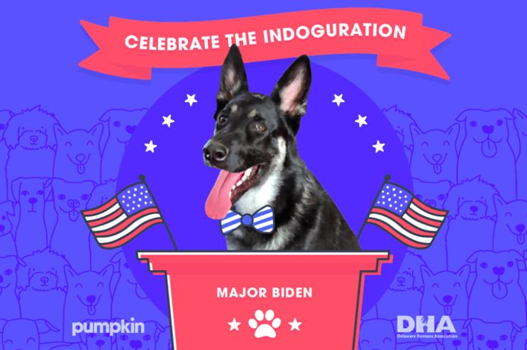 Inside Pumpkin Pet Insurance's 'indoguration' event for Major Biden