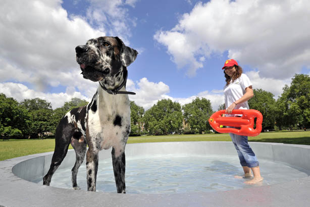 Fetch.co.uk dishes up 'world's largest dog bowl' to keep pets hydrated