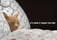 Kitties give IKEA a good feeling inside