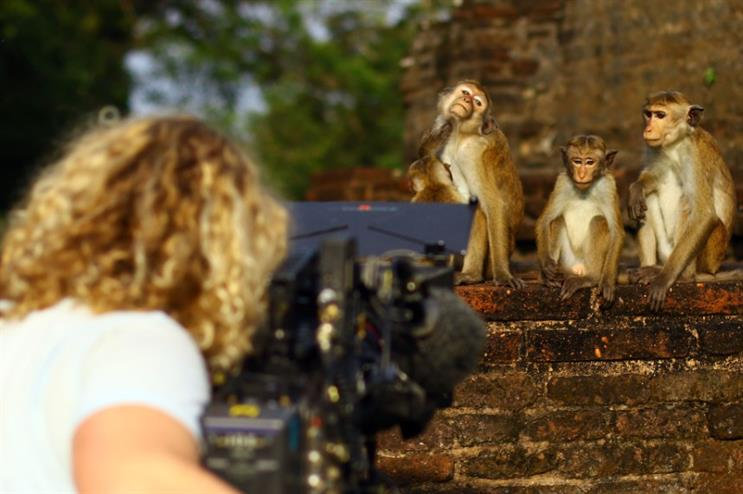 'Giving a monkey a camera proved problematic' - Behind the Campaign with BCW's Wild Guides