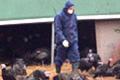 Bird 'flu farm calls in crisis support