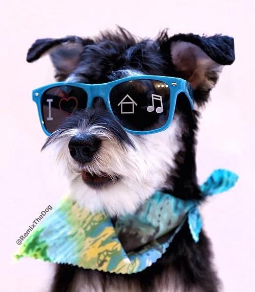 remix the dog