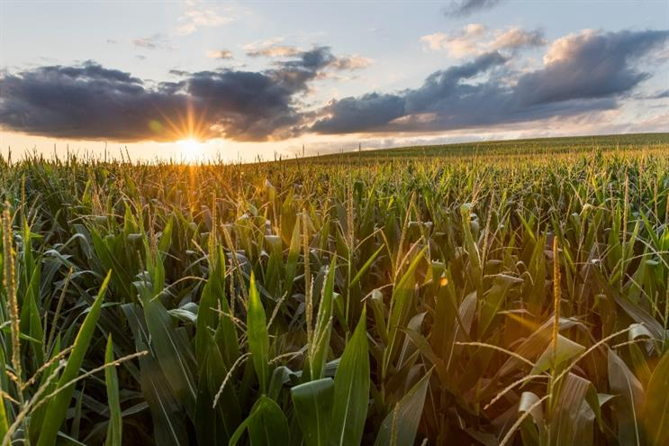 BASF Agricultural Solutions taps VMLY&R to enhance U.S. grower community