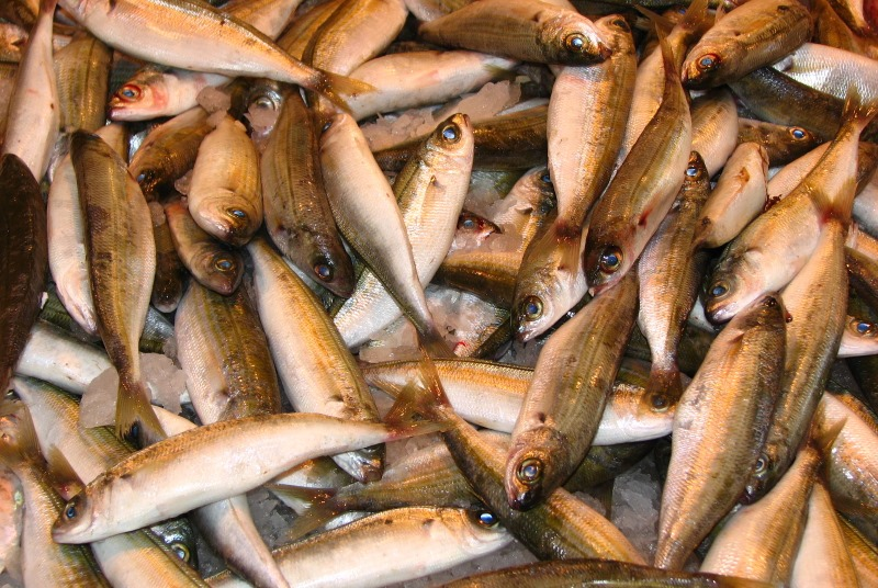 Eating fish can boost antidepressant response