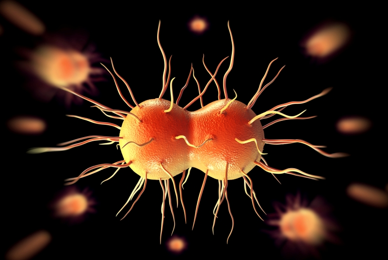 Gonorrhoea bacterium: GPs on alert over drug-resistant strain