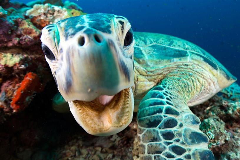 Blue Planet II: Raised awareness of plastic pollution (Pic: BBC)