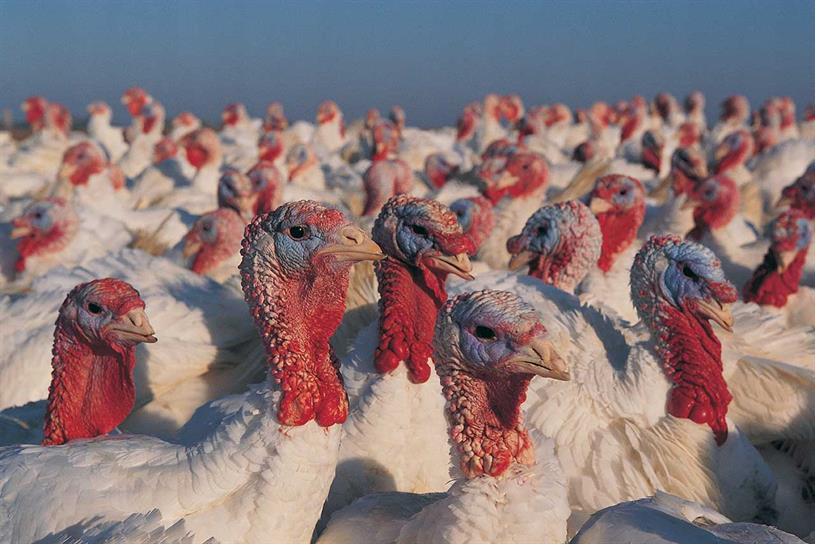 Turkeys: not for a while